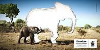 Assine a Petição para salvar a Fauna Bravia Moçambicana / ©: WWF