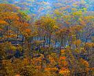 Floresta de Miombo - Niassa