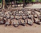 Mandibulas de Elefante - Photo taken in Taratibu, Cabo Delgado, Mozambique